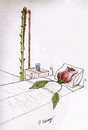 Cartoon: rose (small) by aytrshnby tagged rose,in,sleep