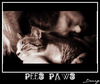 Cartoon: Pees Paws (small) by Krinisty tagged cat,kitty,sleeping,cute,furry,happy,krinisty,art,photography