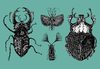 Cartoon: Bugs (small) by Battlestar tagged bugs,insekten,insects,nature,natur,zeichnung,illustration