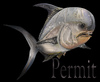 Cartoon: perrmit (small) by HSB-Cartoon tagged permit,fish,sea,ocean,animal,caribian,water,exoticfish,angeln,fishing,hook,airbrush,illustration,airbrushdesign