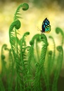 Cartoon: Schmetterling - Butterfly (small) by alesza tagged butterfly,schmetterling,natur,farn,fern,nature