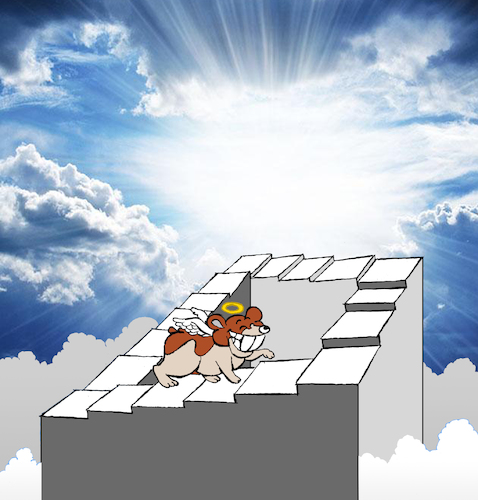 Cartoon: Hamster in Heaven... (medium) by berk-olgun tagged hamster,in,heaven