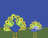 Cartoon: Female Peacock... (small) by berk-olgun tagged female,peacock