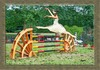 Cartoon: Gazelle (small) by berti tagged ballerina,gazelle,springreiten,turnier,horsejump