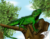 Cartoon: Physignathus cocincinus (small) by swenson tagged reptil,animal,2010,2009,tier,echse,water,agame,green,wasser,wasseragame,drache,dragon