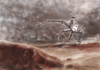 Cartoon: escape from the golem riders (small) by nootoon tagged golem,rider,ride,desert,escape,nootoon,illustration,germany