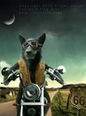 Cartoon: Route sixtysix (small) by fantasio tagged easy rider wolf lonesome biker harley route 66 kult anthro