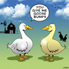 Cartoon: Goose bumps (small) by toons tagged geese,goose,bumps,love,excitement,sex,dating,farms,birds,ducks,farmyard