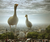 Cartoon: I Have Also Seen This in Paris (small) by BenHeine tagged paris,france,montmartre,hill,people,crowd,foule,scary,funny,wallpaper,highres,poster,science,fiction,humor,scale,echelle,invasion,aliens,duck,bird,animal,photo,manipulation,light,lumiere,tourism,ben,heine,art,family,together,district,texture,canard,copyri