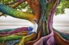 Cartoon: Just Dreaming (small) by BenHeine tagged dreaming,dream,colors,colorful,tree,nature,protection,cocoon