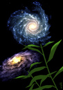 Cartoon: galaxy flowers (small) by Medi Belortaja tagged galaxy,galaxies,universe,flowers