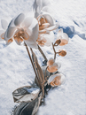 Cartoon: not from this world (small) by Quedlinburger tagged winter,wetter,frühling,jahreszeiten,phantom,illusion