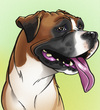 Cartoon: Charlie the Boxer (small) by nolanium tagged dog,caricature,boxer,nolan,harris,nolanium